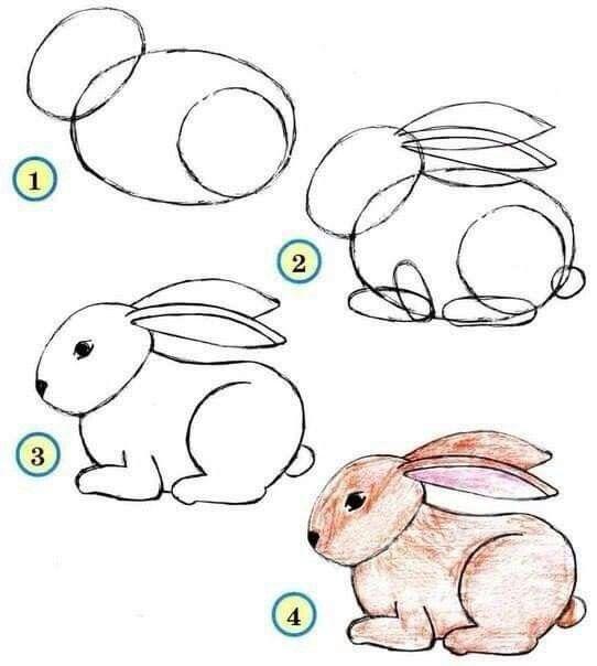 Konijn tekenen | Dieren tekenen, Leer tekenen, Vogels tekenen