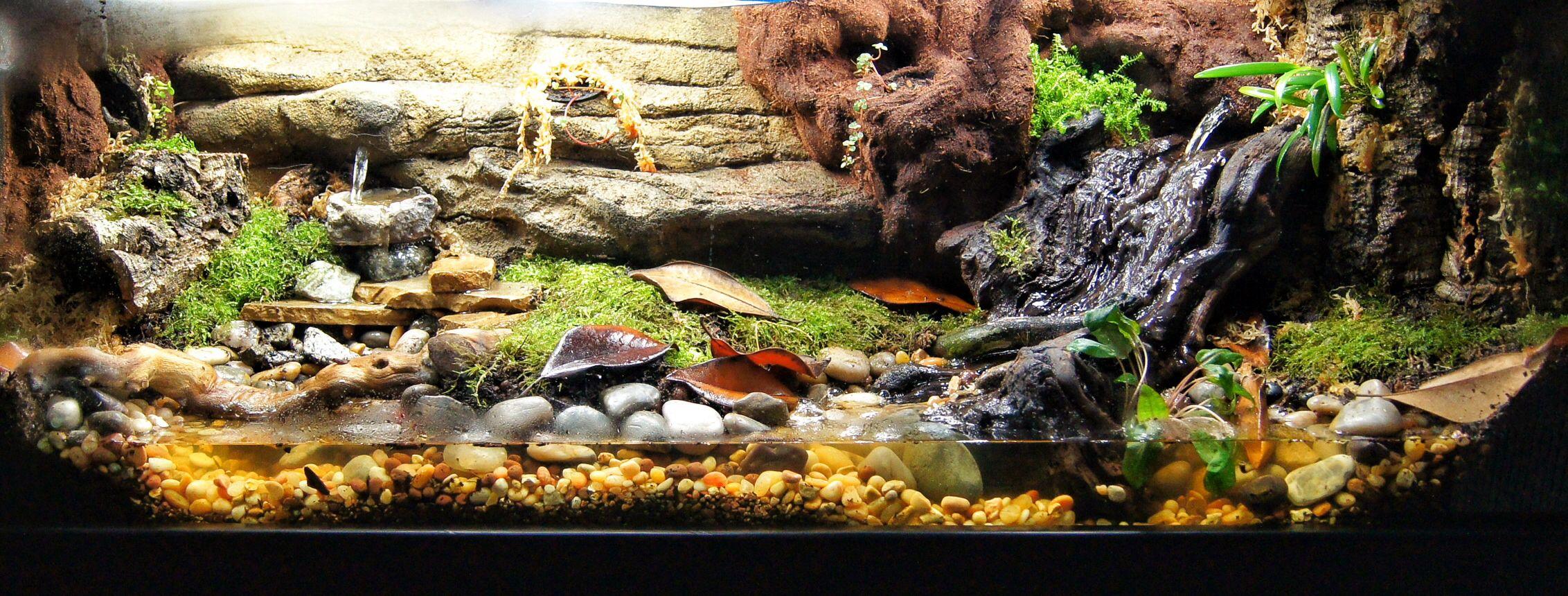 40 Gallon Custom Vivarium Frogs And Vivariums Frog Terrarium Poison Dart Reptile