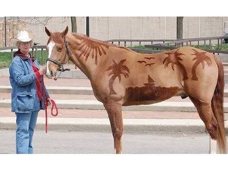 Ein Bild Fur Theo Norgelmann Off Topic Forum Pferde Frisuren Schone Pferde Pferde