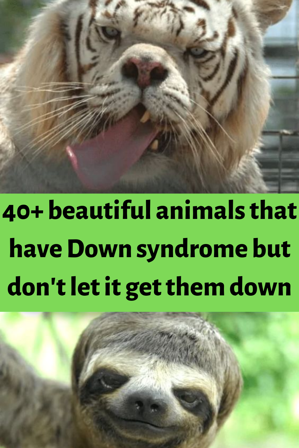 40+ beautiful animals that have Down syndrome but don't