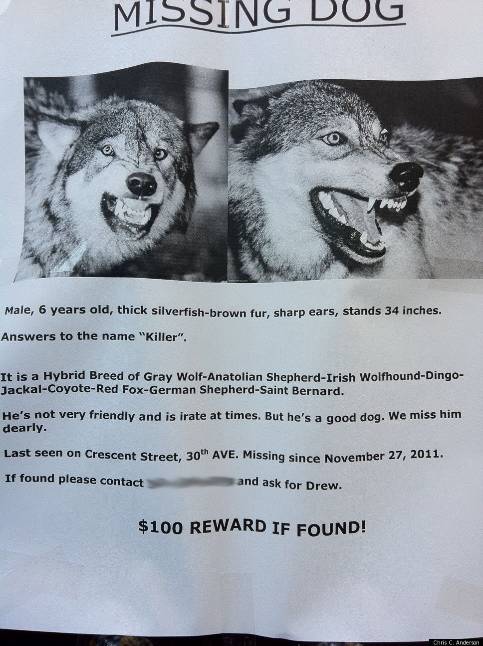 PHOTO Have You Seen This Dog – Funny Missing Person Poster