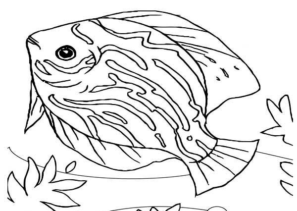 beautiful saltwater fish sea animals coloring page color fish
