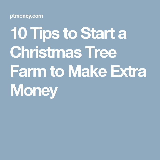 10 tips to start a christmas tree farm to make extra money