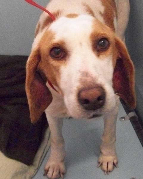 Adopt 142194 on Animal shelter, Poor dog, Adoption