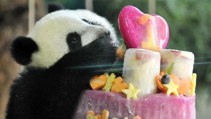 Pandas faking 'hysterical pregnancies' to get special treatment, extra rations | SBS News
