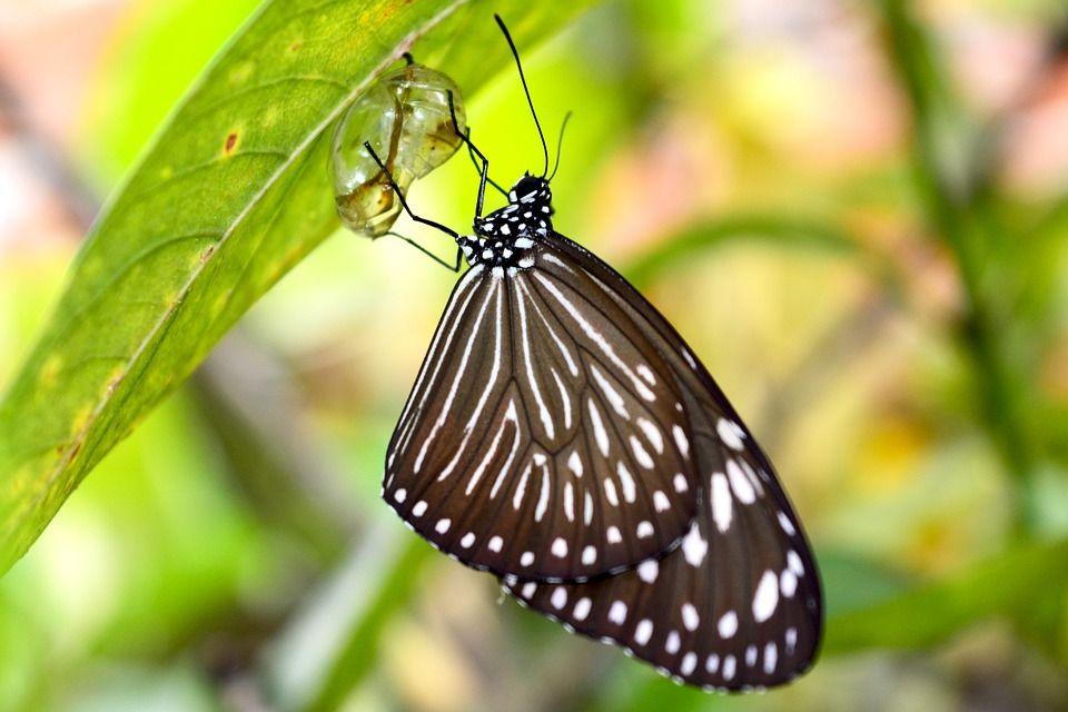 Vieną dieną, mažas įtrūkimas pasirodė drugelio kokone. Vyras sėdėjo ir kelias valandas stebėjo drugelį, bandantį..
