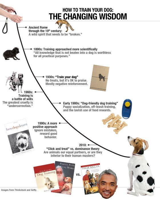Dog Training Illustration Dog Training Training Your Dog Dogs