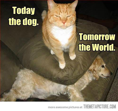 Today the dog        Tomorrow the World