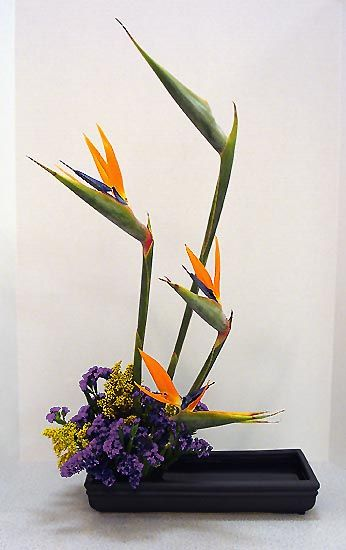 A Christchurch Florist Miss Feaver Florist specialise in the preparation, design and delivery of beautiful fresh flowers daily, which means you receive the freshest flowers for your special occasion.
