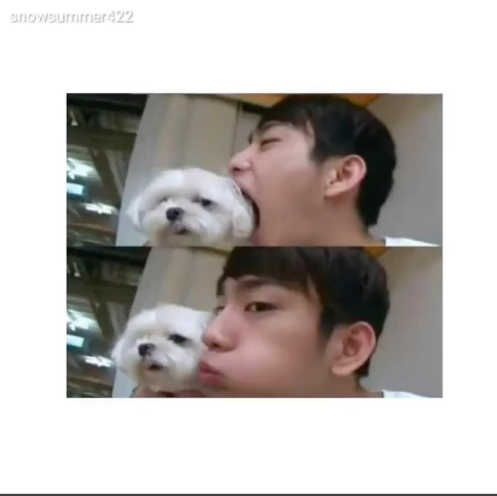 got7 dog by Riley Yuan
