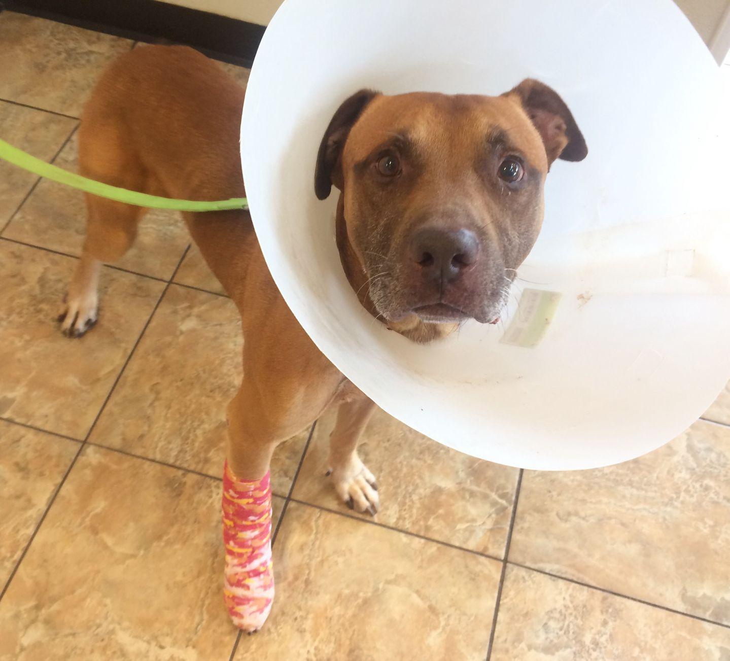 Adopt Angel needs your help! on Pet adoption, Dog