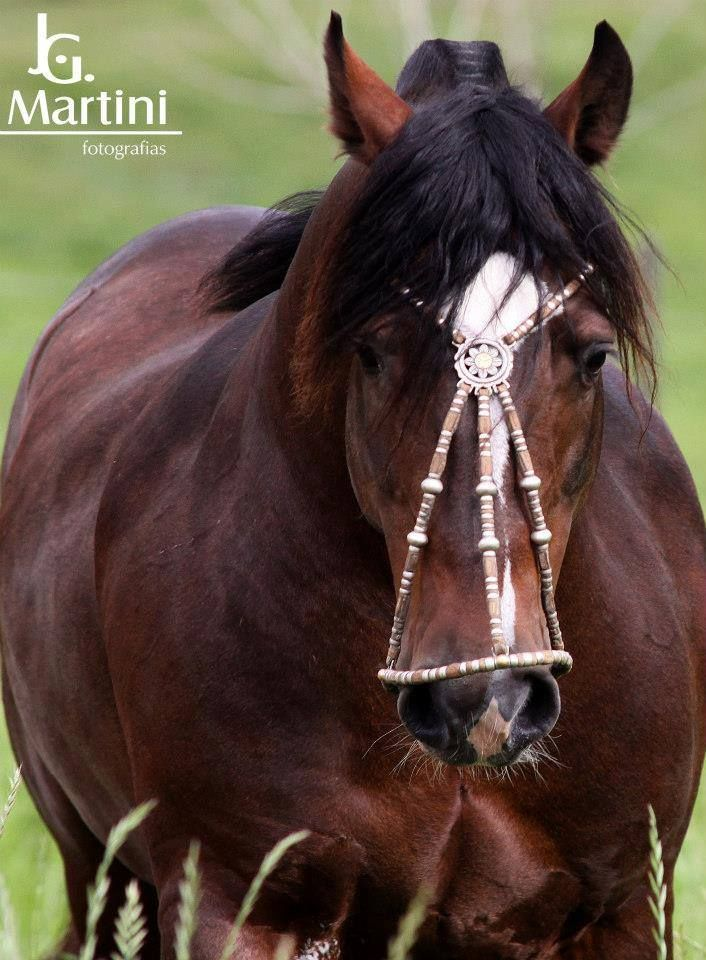 Zaino Colorado Lista Al Pico Unusual Horse Horse Photos Horses