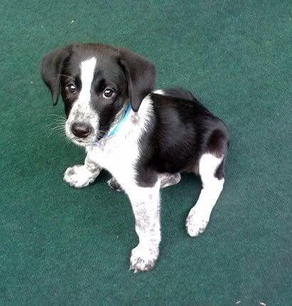 Champ Our Border Beagle Mix Beagle Mix Beagle Animals