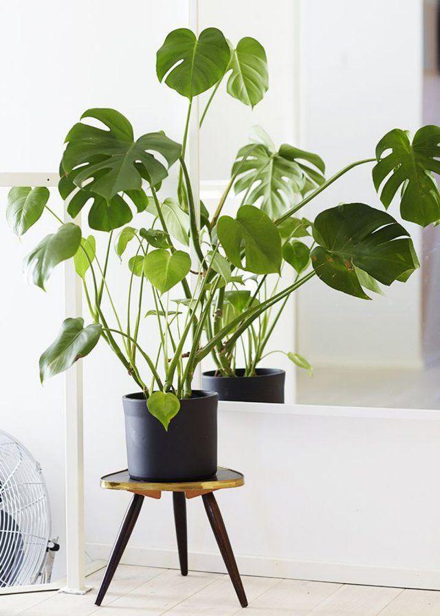 Installer la plante sur un tabouret