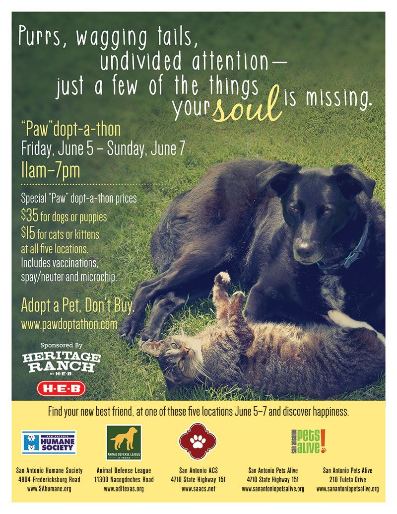 Pin by San Antonio Humane Society on Promotions/Events