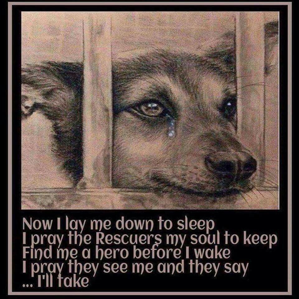 """"""" Now I lay me down to sleep"""" Shelter dogs, Dogs"""