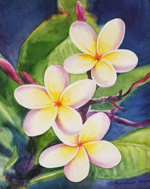 3b2383a381e95 Plumeria Original Watercolor Painting, Tropical Flower Painting, Hawaiian  Flower, Handmade ART, wa