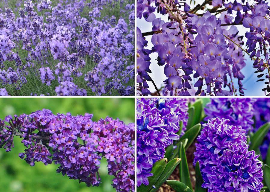 4 Najlepsze Rosliny Do Ogrodu O Fioletowych Pachnacych Kwiatach Zielony Ogrodek Plants