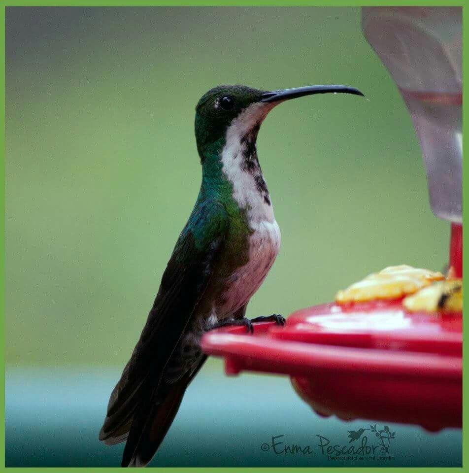 At feeder. .....