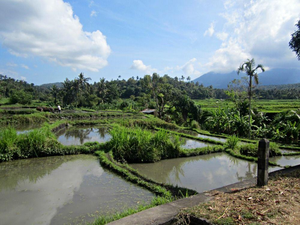 Riziere de Tirtagangga Blog Voyage Trace ta Route www.trace-ta-route.com http://www.trace-ta-route.com/escapade-bali/ #tracetaroute #tirtagangga #bali #indonesie #indonesia #rizieres