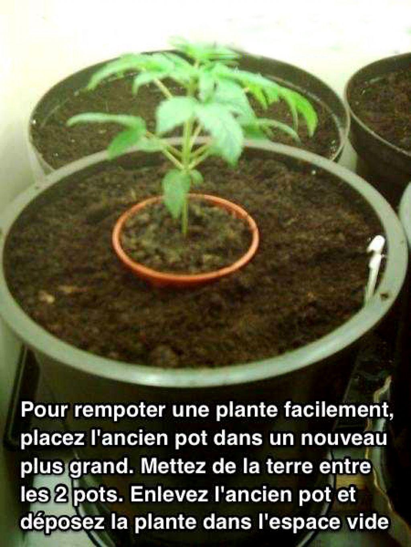 l'astuce de génie pour arroser ses plantes quand on part en vacances