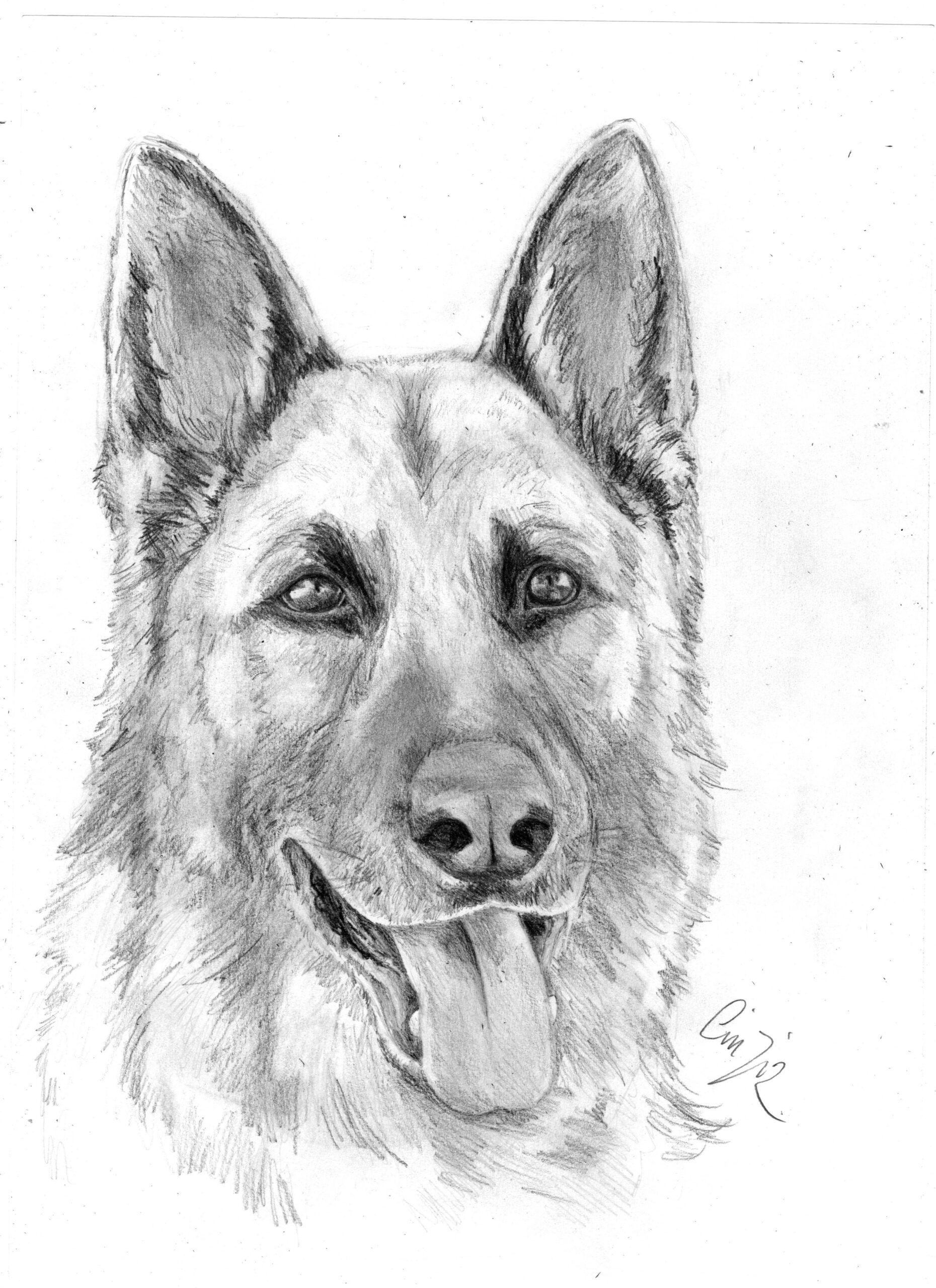 Disegni Difficili Da Colorare Fantastico Disegni Di Cane Difficili Da Colorare Coloratutto We Nel 2020 Disegni Di Cane Arte Di Cani Disegni