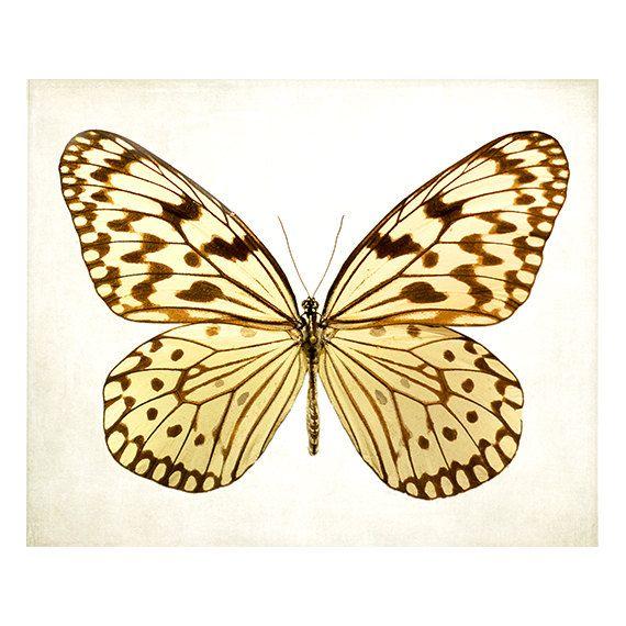 Purple Butterfly artwork, butterfly photography, butterflies art ...