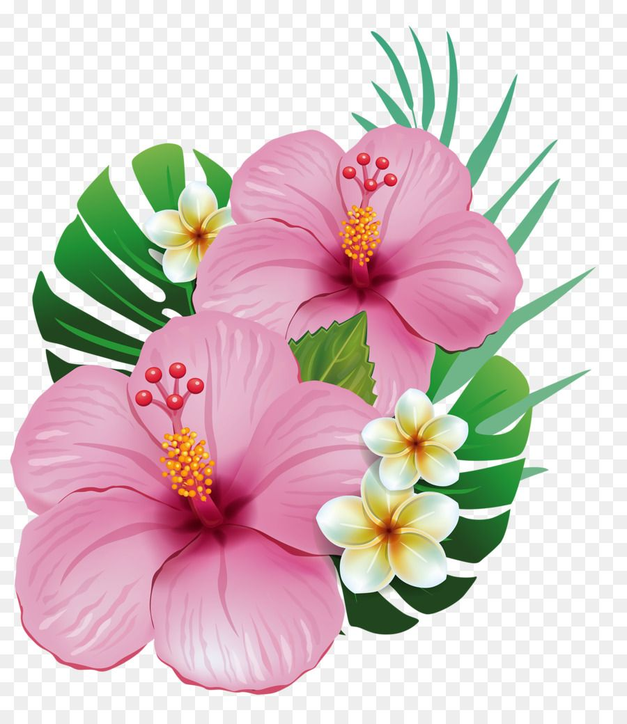 Hawaii Shoeblackplant Common Hibiscus Flower Clip Art Tropical Png Is About Is About Hibiscus Plant Flower Alstroemeri Flower Art Flower Painting Hibiscus