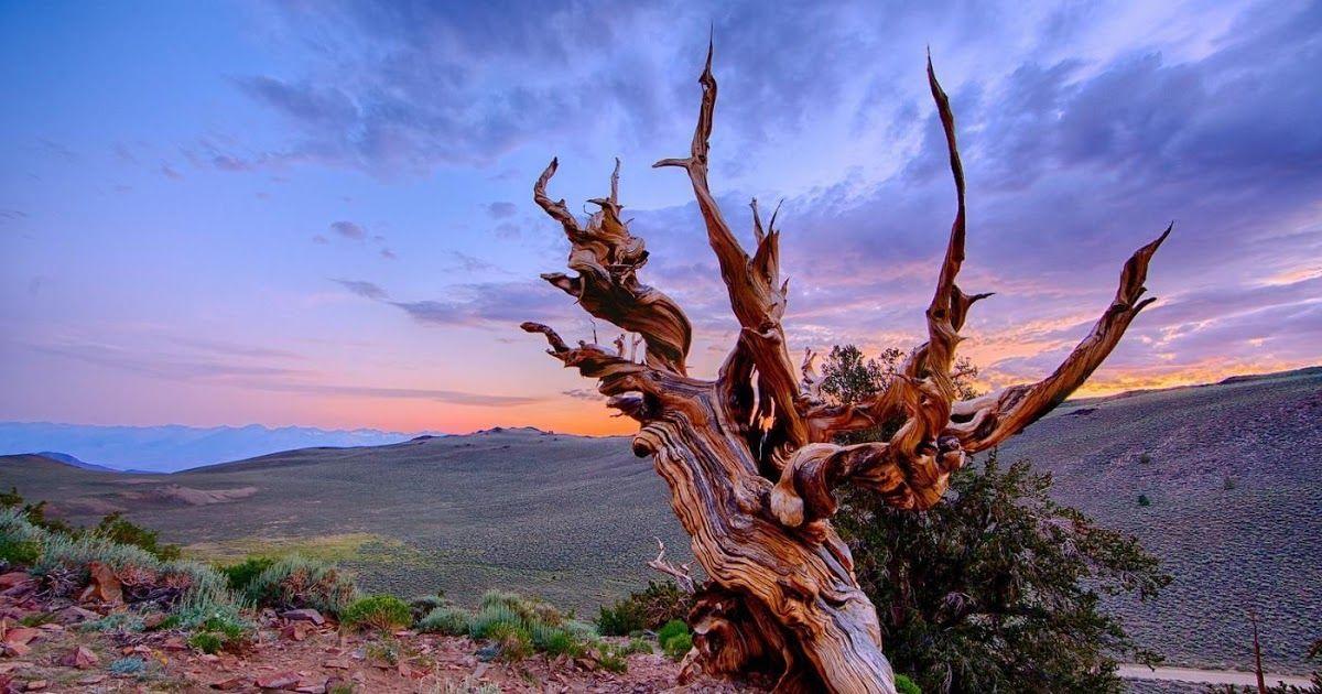 26 Background Pemandangan Pohon Pinus Dengan Warna Yang Hijau Kehitaman Ini Menjadi Sorotan Mata Gambar Pemandangan Poh Di 2020 Pemandangan Yosemite Fotografi Kota