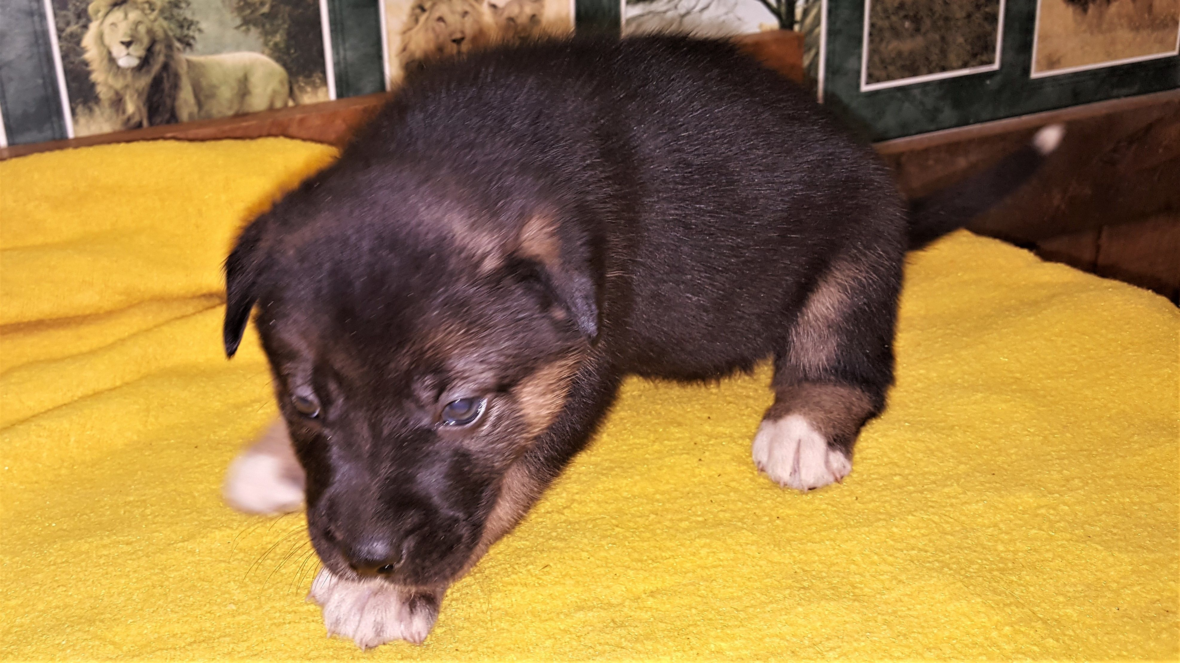 Adopt Lynnel On Dogs Dog Cat Dog Mixes