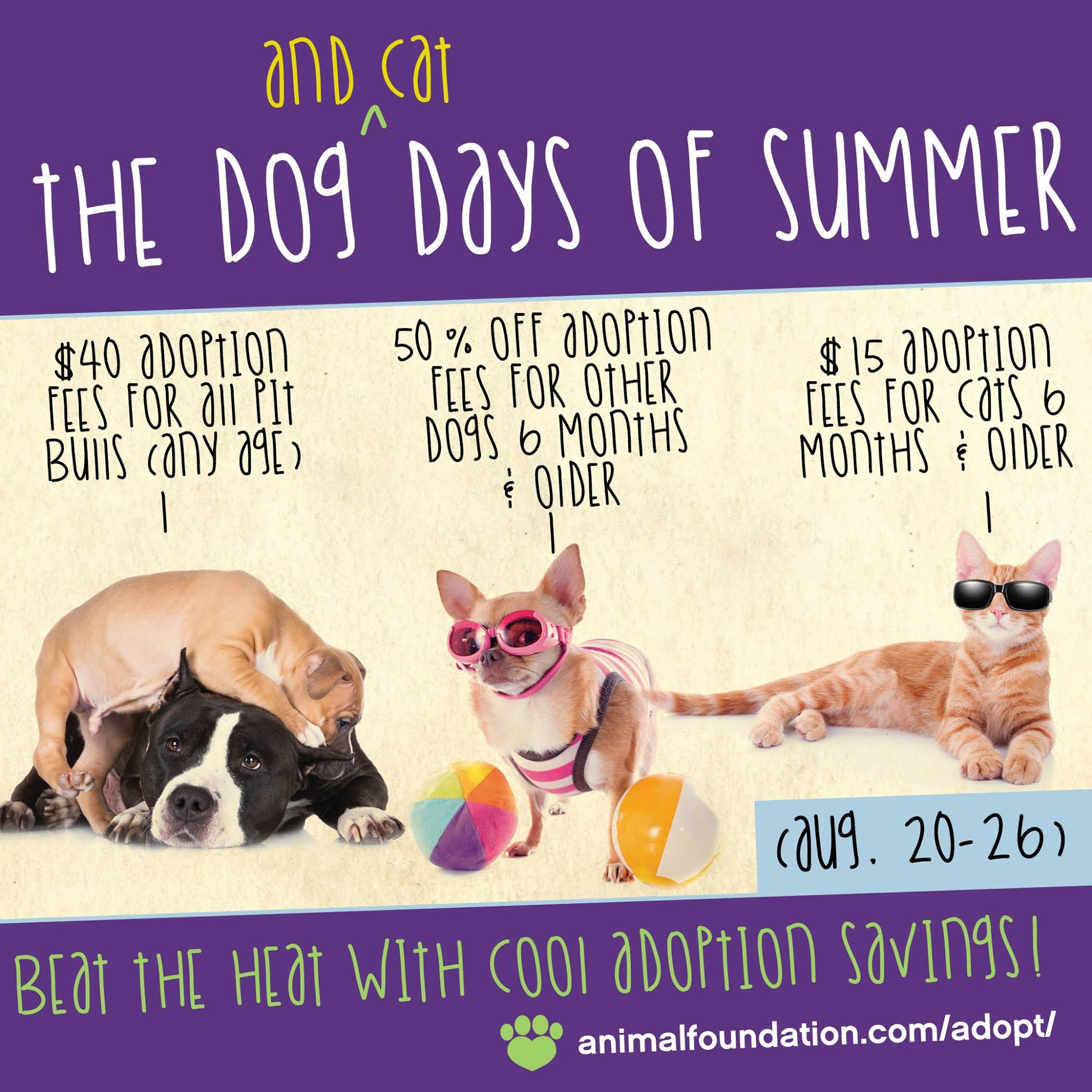 Beat The Heat With Cool Deals During Our Dog And Cat Days Of Summer Adoption Special Beginning Today Through 8 26 40 Ado Cat Day Adoption Pets Online