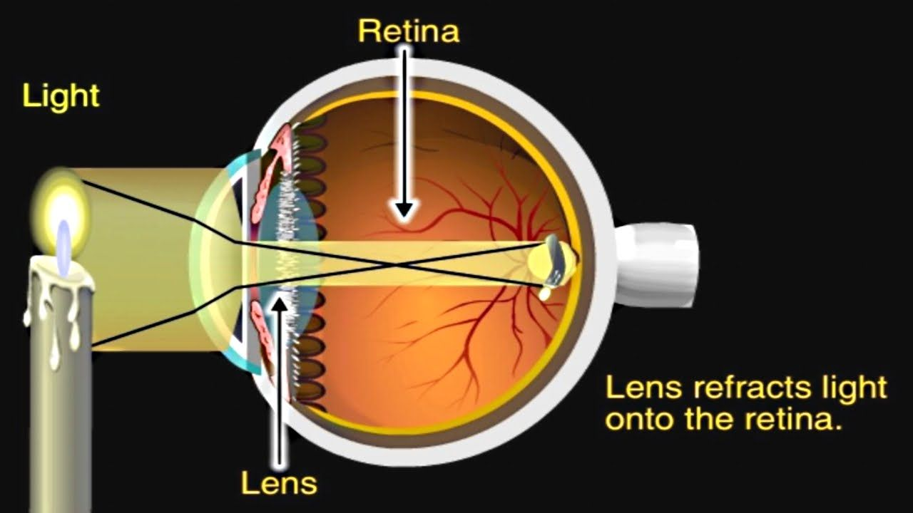 How The Eye Works Animation How Do We See Video Nearsighted