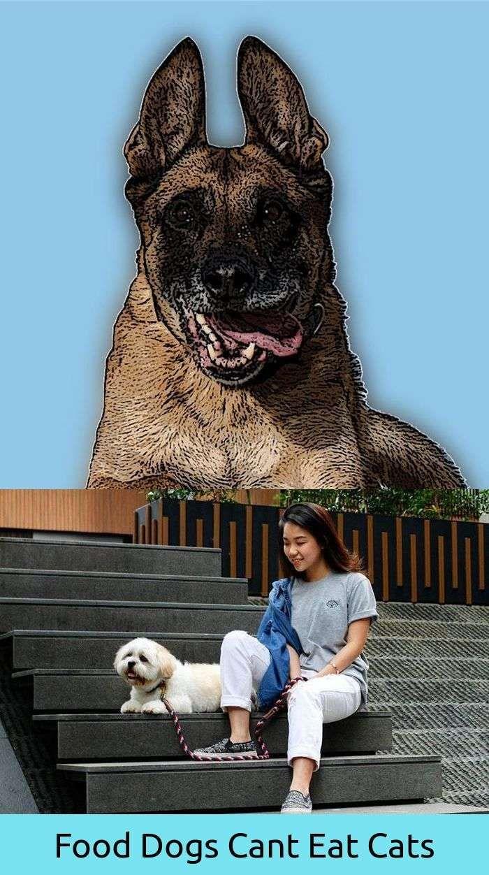 Compassionate dog funny rain dog bed pinterest dogs dog