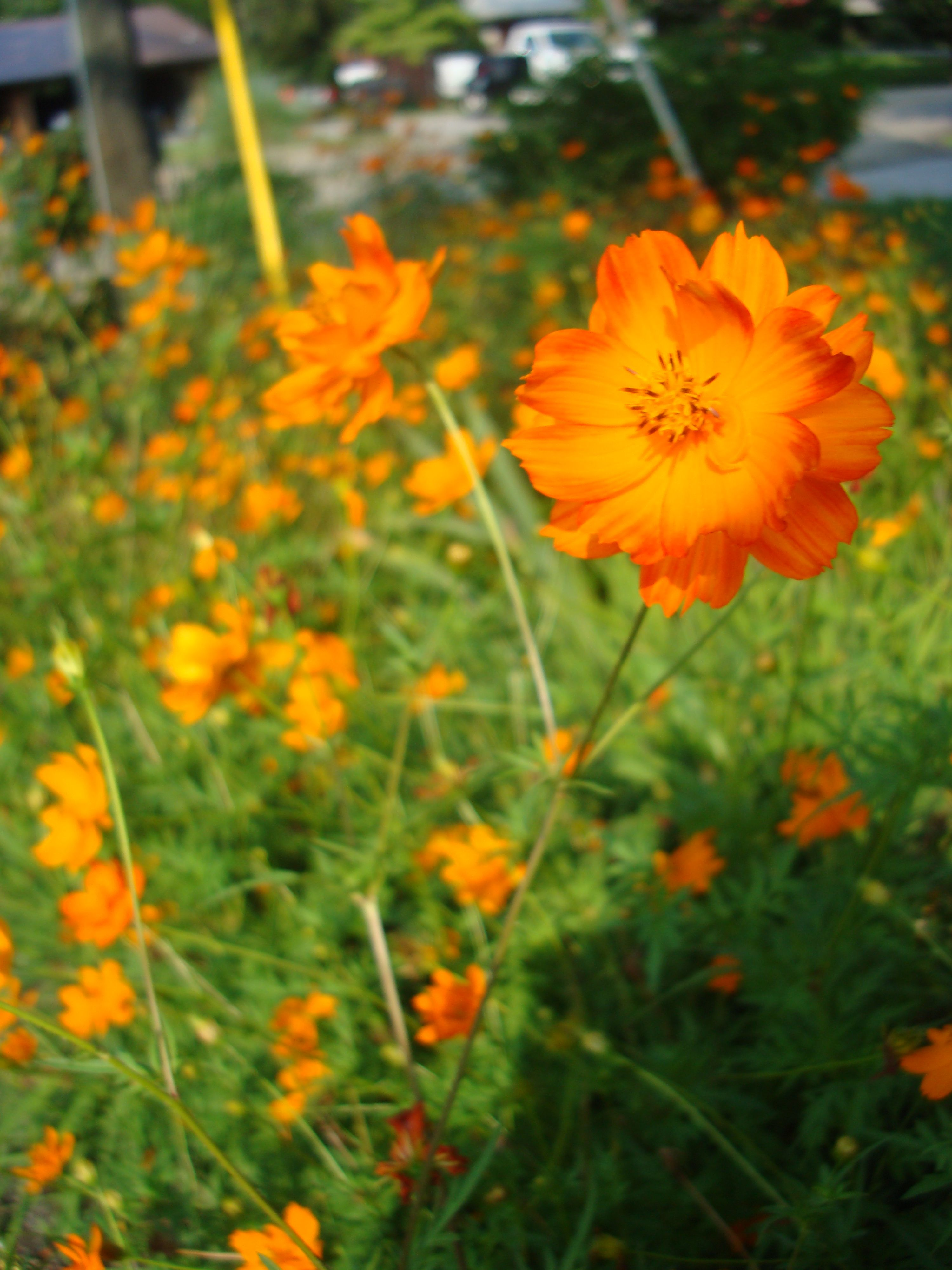 Pretty Orange Flowers Amazing Pictures Pinterest Orange