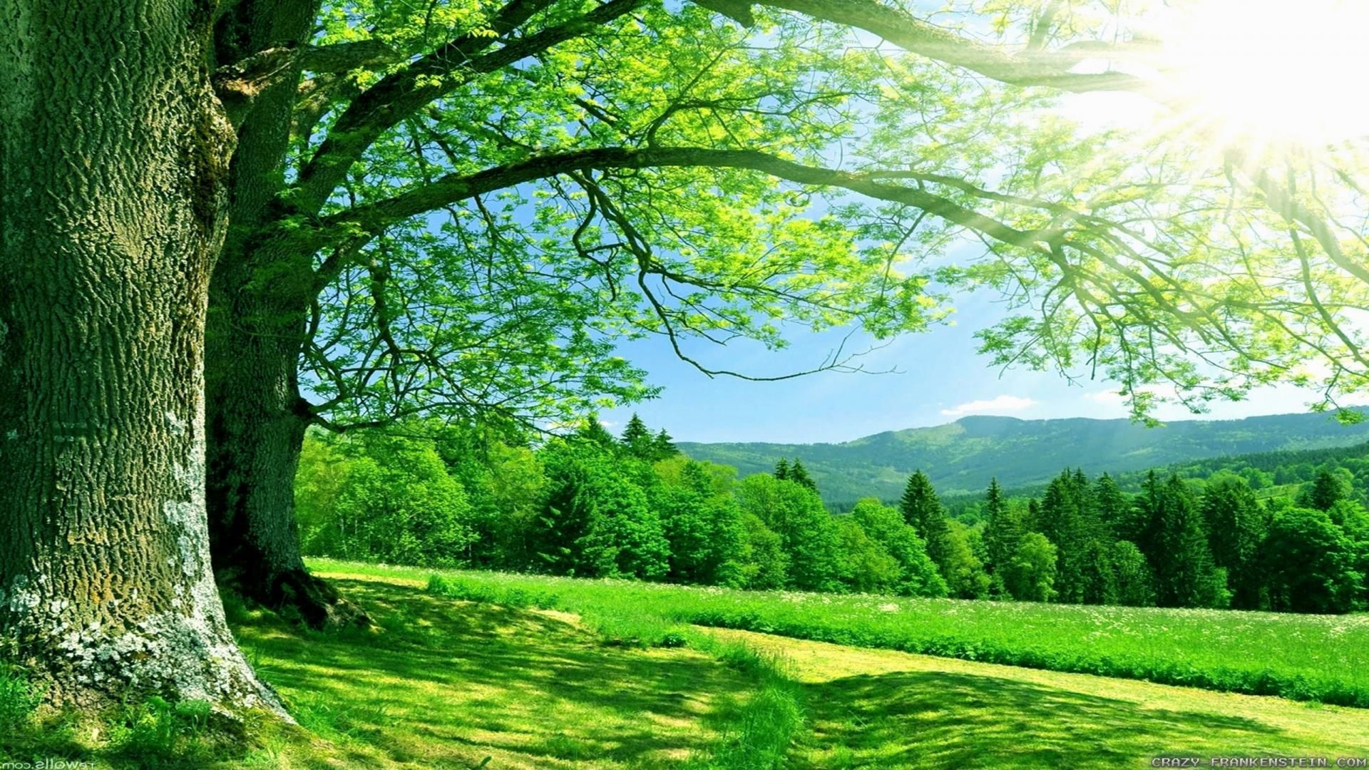 Natural Green Landscape Hd 1920x1080 Need Iphone 6s Plus Wallpaper Background For Iphon Summer Desktop Backgrounds Landscape Wallpaper Nature Wallpaper