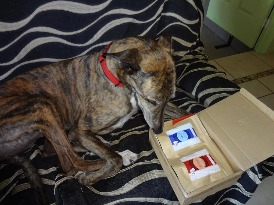 Tiger trying to pick which flavour to have from his Sampler Pack! :D
