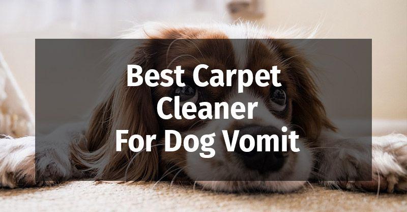 Best Carpet Cleaner For Dog Vomit In 2020 Best Carpet How To Clean Carpet Carpet Cleaners