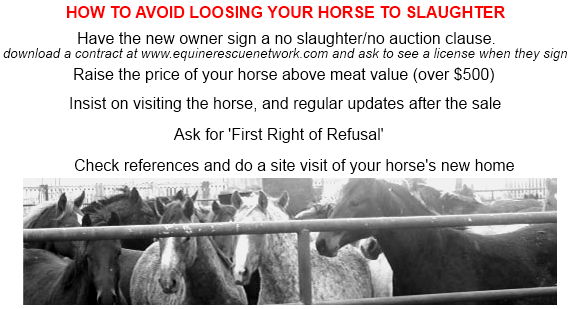 HOW TO AVOID LOSING YOUR HORSE TO SLAUGHTER