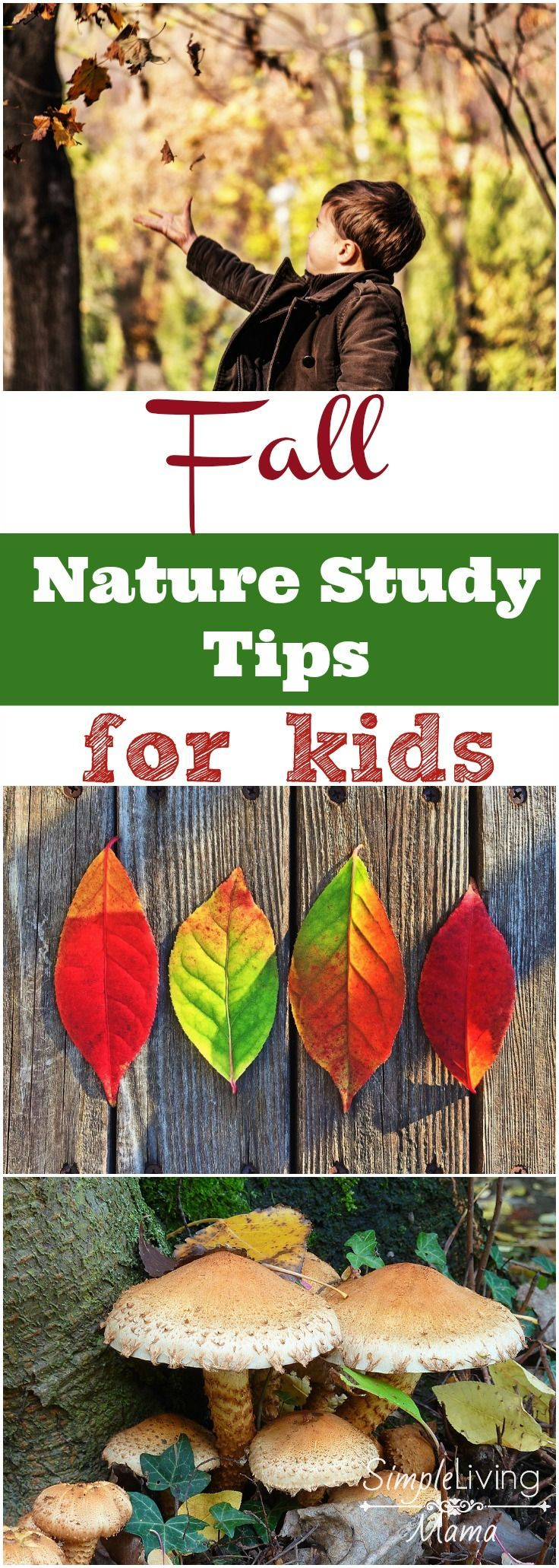 Fall Is The Perfect Time To Visit Myrtle Beach South: Fall Nature Study For Kids - Tips And Ideas