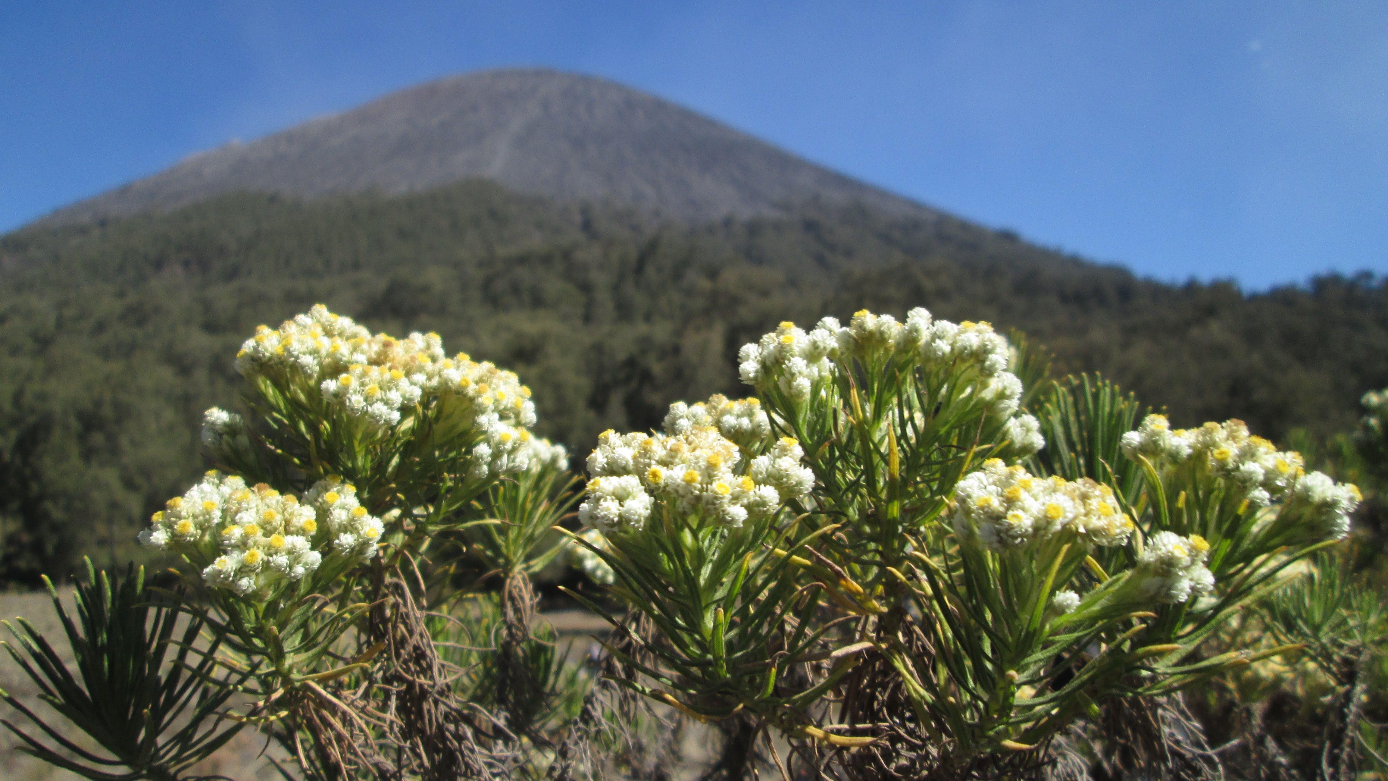 Pin Di Holiday At Mt Semeru