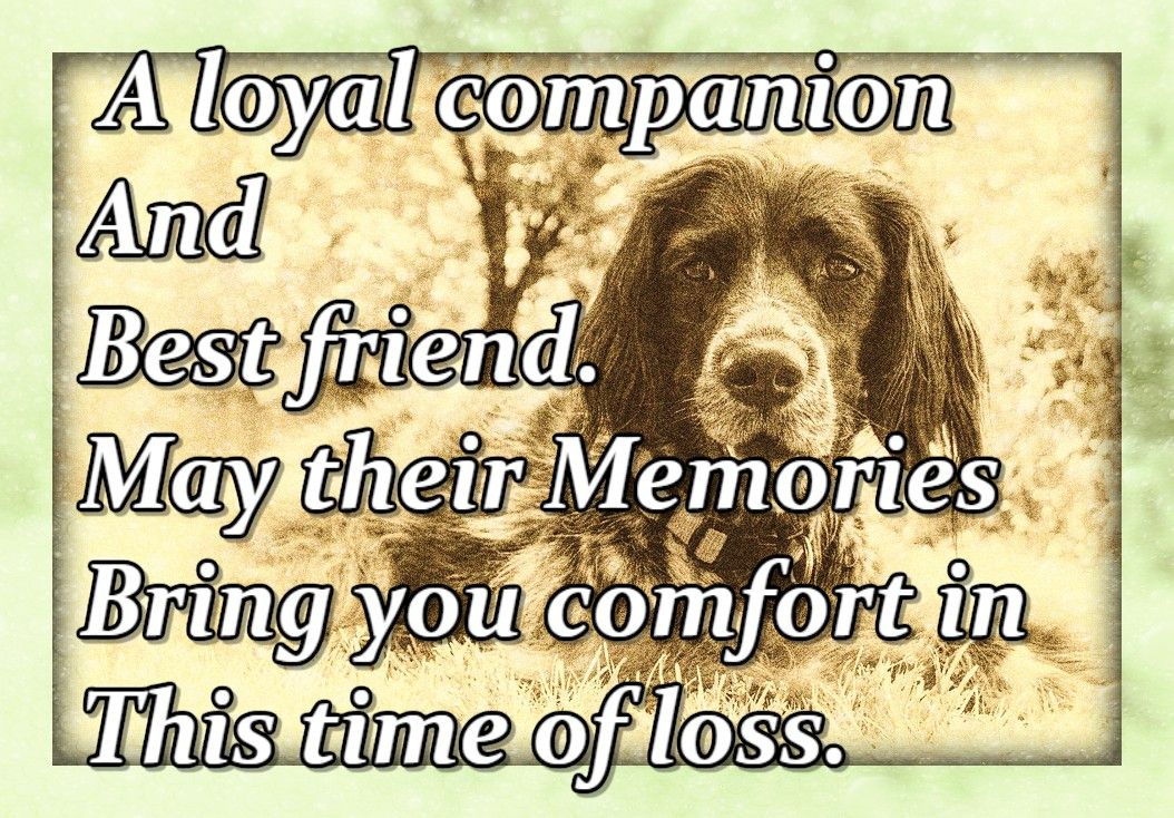 A Loyal Companion And Best Friend May Their Memories Bring You