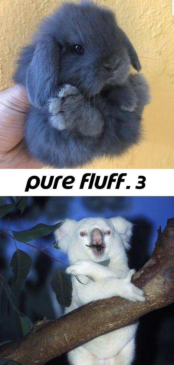Pure fluff. 3 #albinoanimals