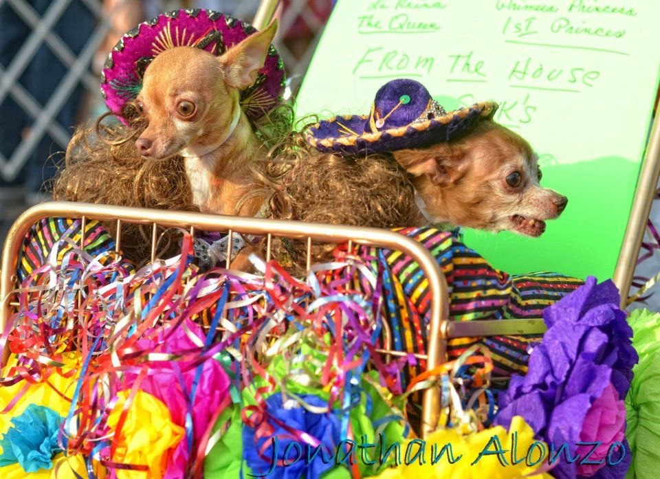 Fiesta Week In San Antonio Texas Dog Parade