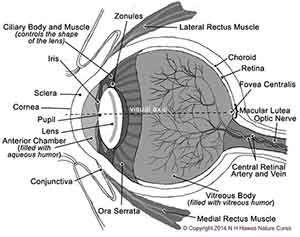 ae71a856211222ecdecb8a8f5a677e27 eye diagram nat h hawes nature cures health living pinterest