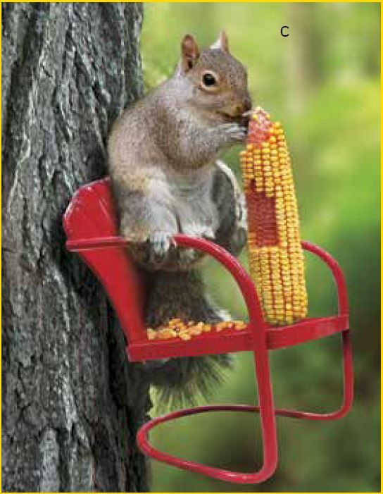 Are the squirrels overtaking your birdfeeders? Supply them their own retro chair squirrel feeder. New arrival and only $12.99.
