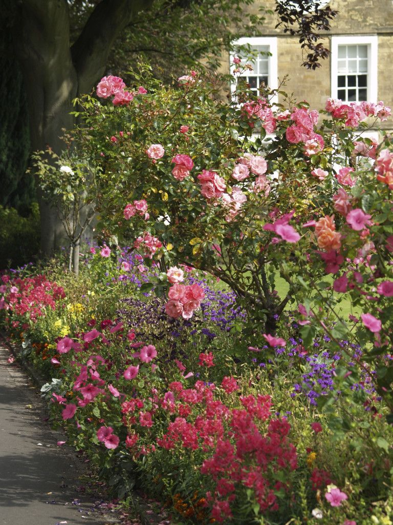 Complement To This Diverse English Garden Style Border Roses Pair Well With Other Water Loving Plants So You Can Many Different Types Of Flowers When