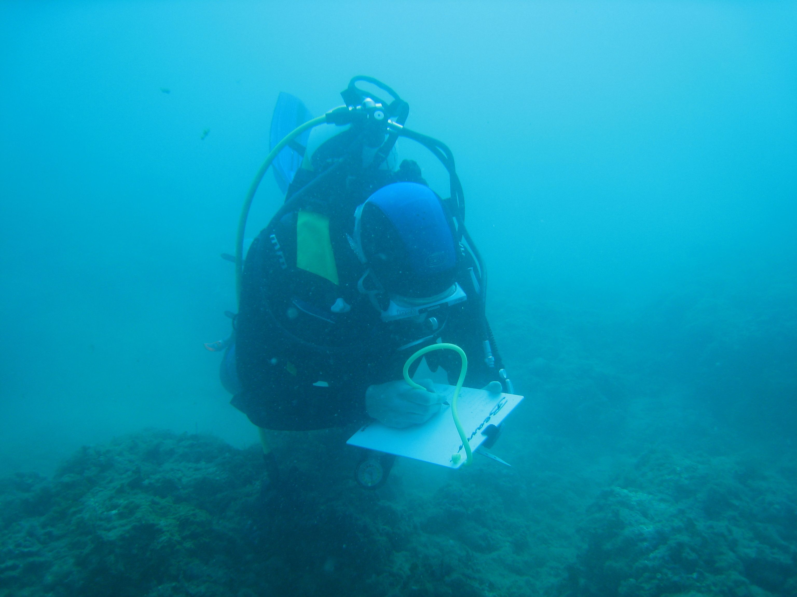 Eco Dive Volunteer Collecting Data On Key Species Diver Marine Conservation Volunteer Diving