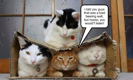 They Just Don T Build Them Like They Used To Cats Cats Funny Cat Pictures Crazy Cats