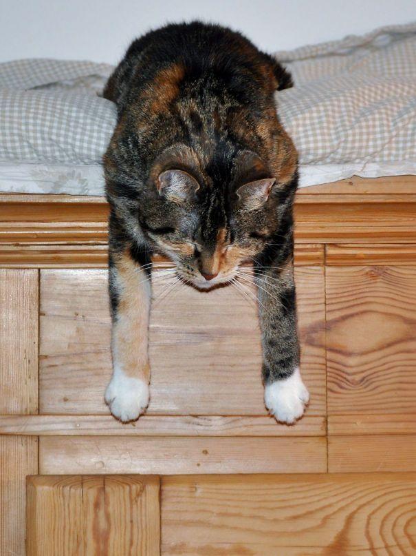Cat Cosima Sleeps Down From The Closet | Sleepy cat, Cats, Cat ...