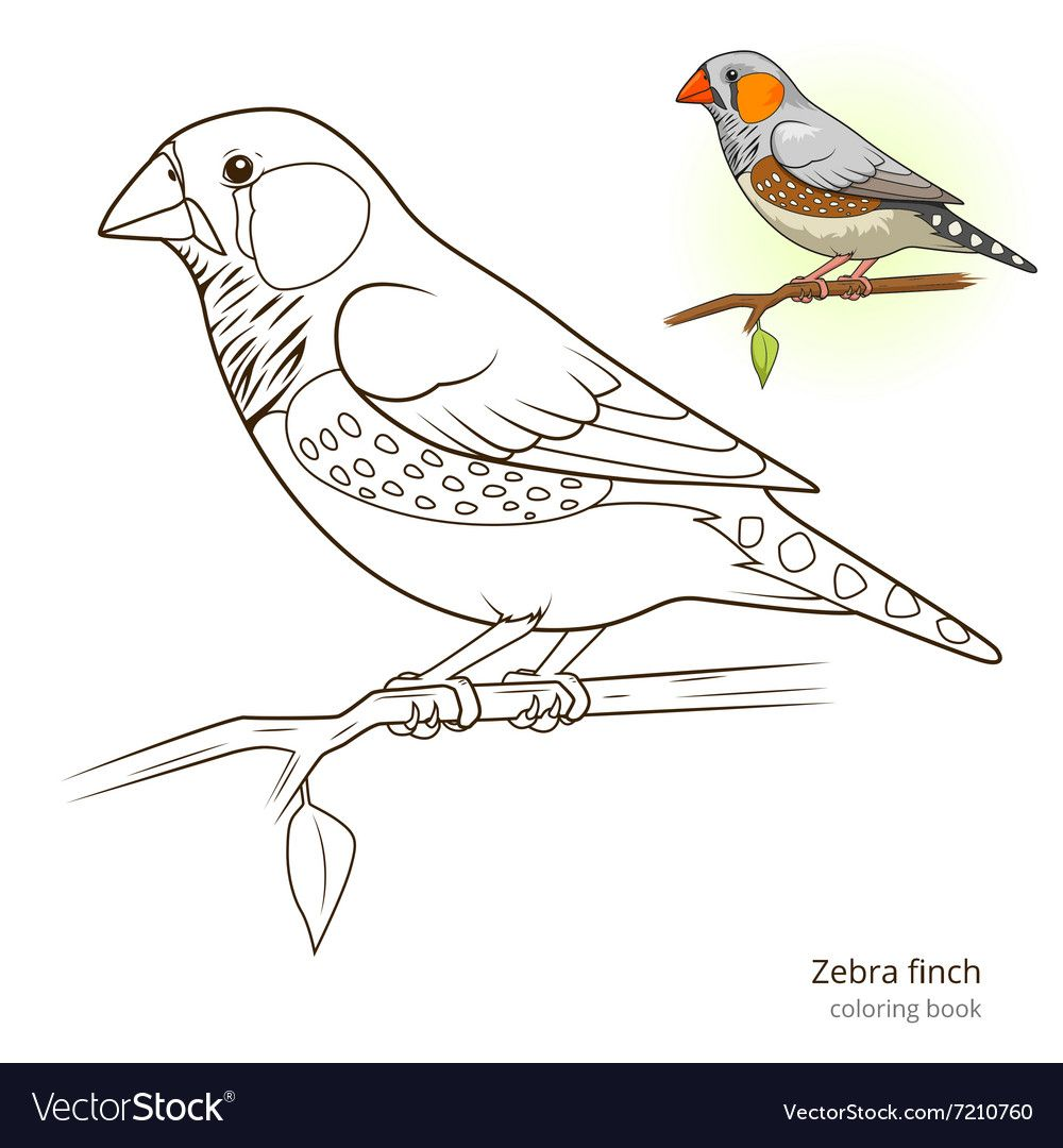 Pin By Marnie Becerra On Beading Finches Bird Bird Coloring Pages